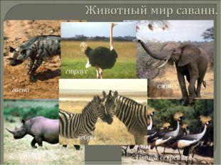 гиена страус бегемот Птица-секретарь зебры слон