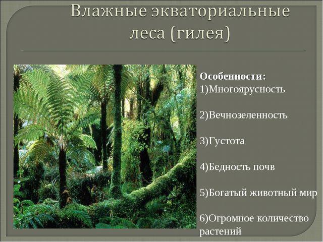 Особенности: 1)Многоярусность 2)Вечнозеленность 3)Густота 4)Бедность почв 5)Б...