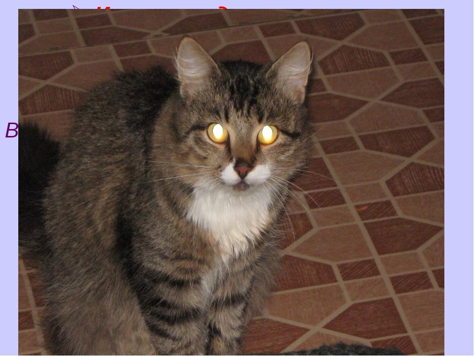 Измерение давления на опор В разных положениях кот оказывает давление от 0,7...