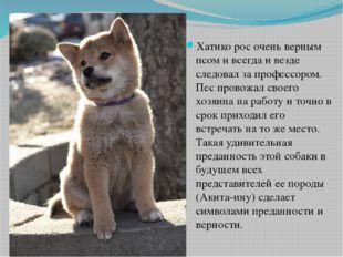 Хатико рос очень верным псом и всегда и везде следовал за профессором. Пес пр
