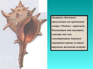 Название «Финикия» происходит от греческого слова « Phoinix»- «красный». Фини