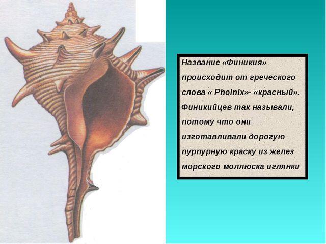 Название «Финикия» происходит от греческого слова « Phoinix»- «красный». Фини...