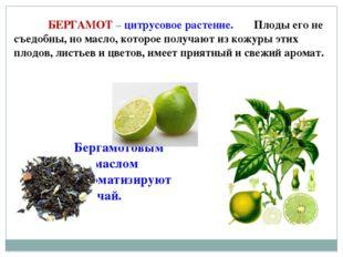 БЕРГАМОТ – цитрусовое растение. Плоды его не съедобны, но масло, которое по