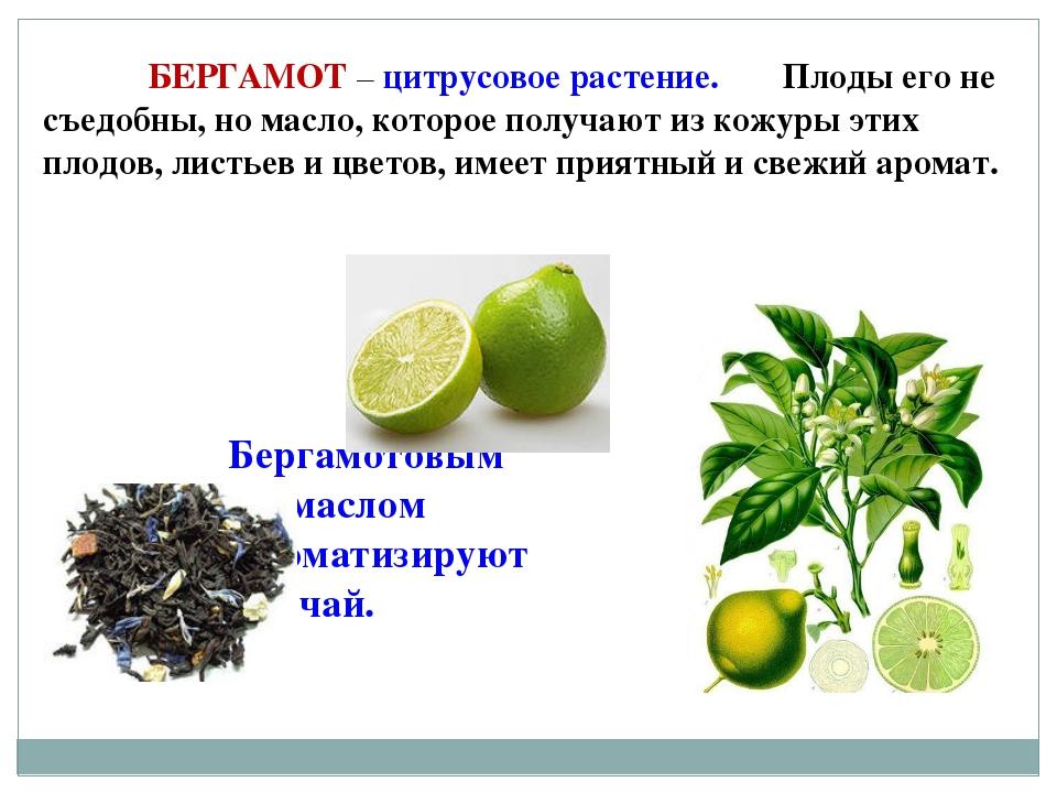 БЕРГАМОТ – цитрусовое растение. Плоды его не съедобны, но масло, которое по...