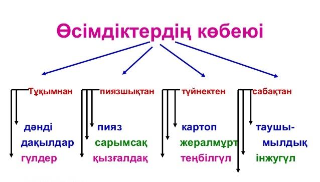 D:\Documents and Settings\1\Рабочий стол\АШЫК САБАК\9-638.jpg