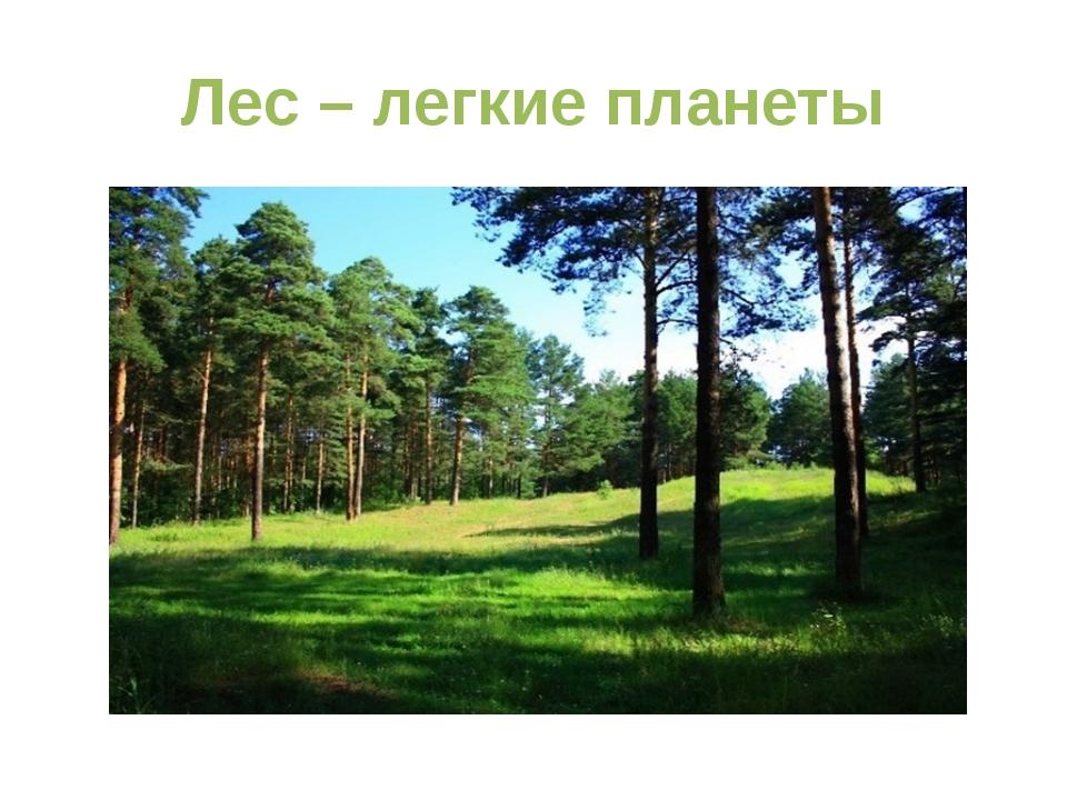 Лес – легкие планеты