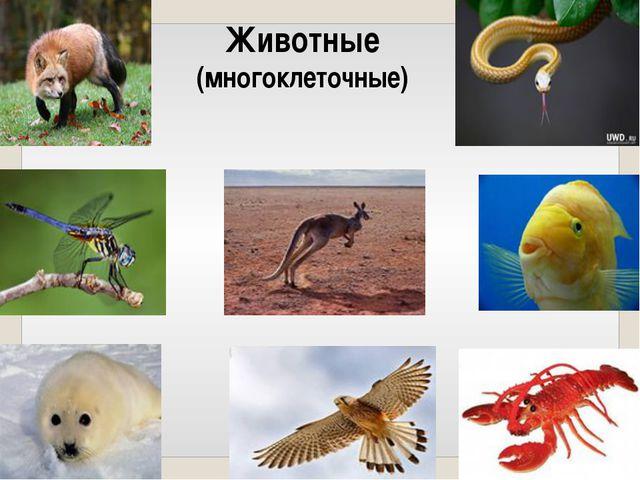 Животные (многоклеточные)