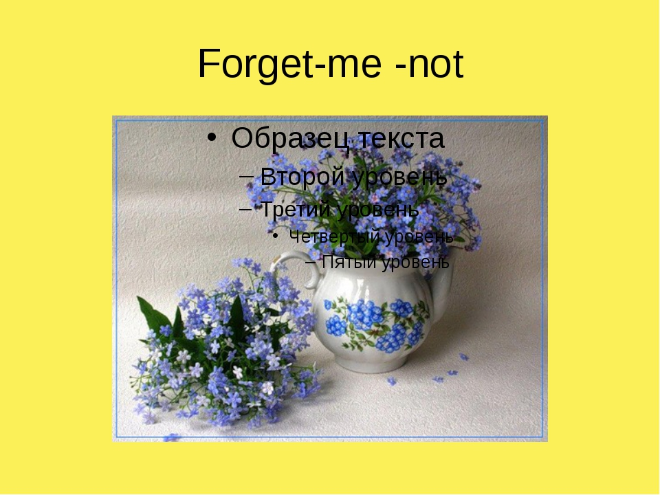 Forget-me -not