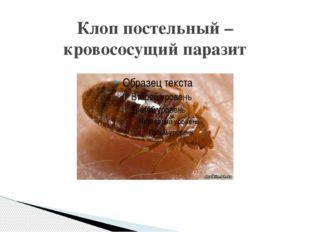 Клоп постельный – кровососущий паразит