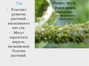 Тли Угнетают развитие растений, высасывая из них сок. Могут переносить вирусы