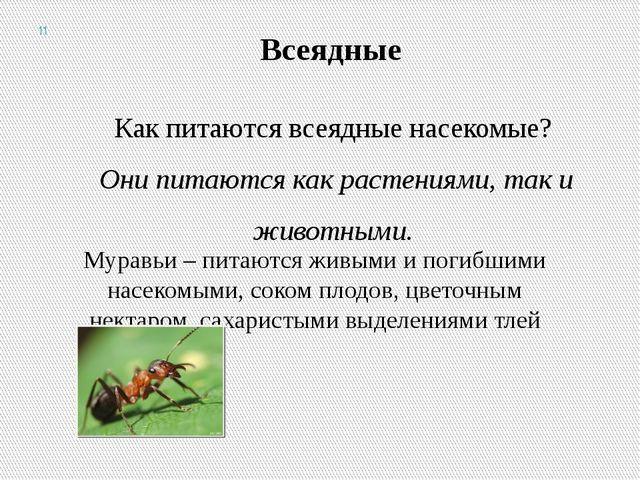 Всеядные Как питаются всеядные насекомые? Они питаются как растениями, так и...