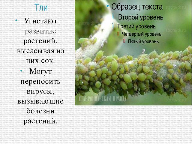 Тли Угнетают развитие растений, высасывая из них сок. Могут переносить вирусы...
