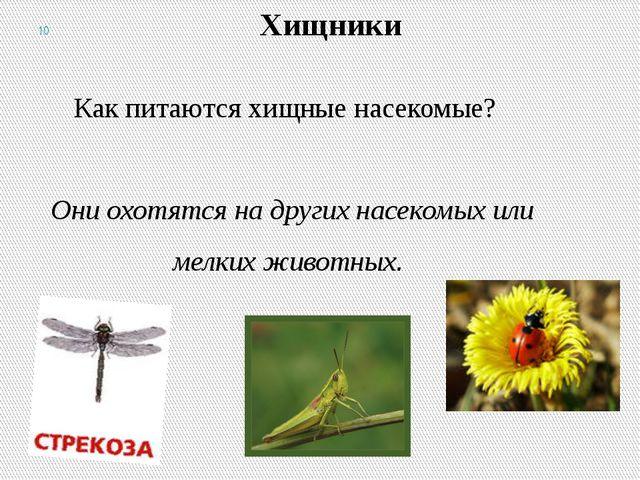 Хищники Как питаются хищные насекомые? Они охотятся на других насекомых или м...