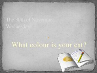 What colour is your cat? The 30th of November Wednesday