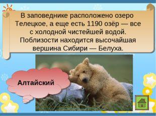 В заповеднике расположено озеро Телецкое, а еще есть 1190 озёр— все схолодн