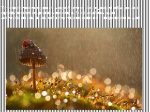 Тот запах, что исходит от мокрой земли после дождя, обусловлен органическим в