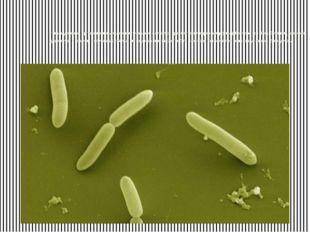 Самым древним организмом, выявленным учеными, считается архибактерия термоац