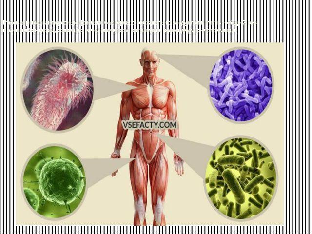 Рассматривая интересные факты о бактериях, обязательно следует отметить – общ...