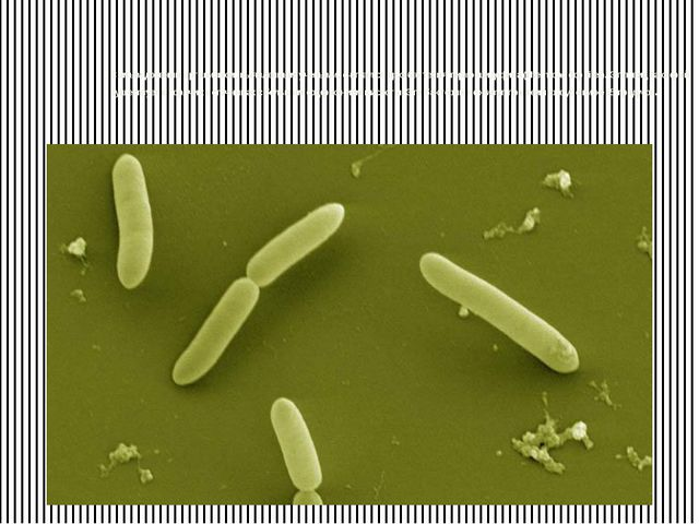 Самым древним организмом, выявленным учеными, считается архибактерия термоац...