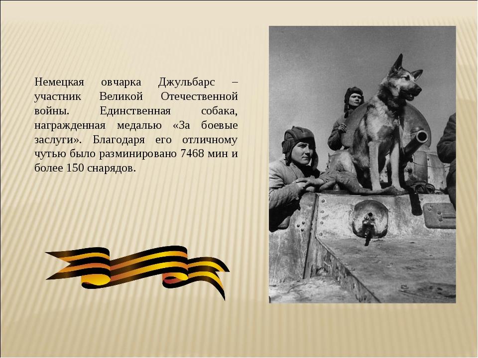 Немецкая овчарка Джульбарс – участник Великой Отечественной войны. Единственн...