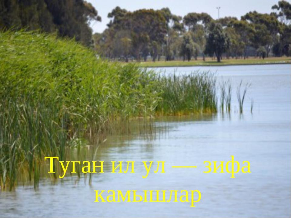 Туган ил ул —зифа камышлар