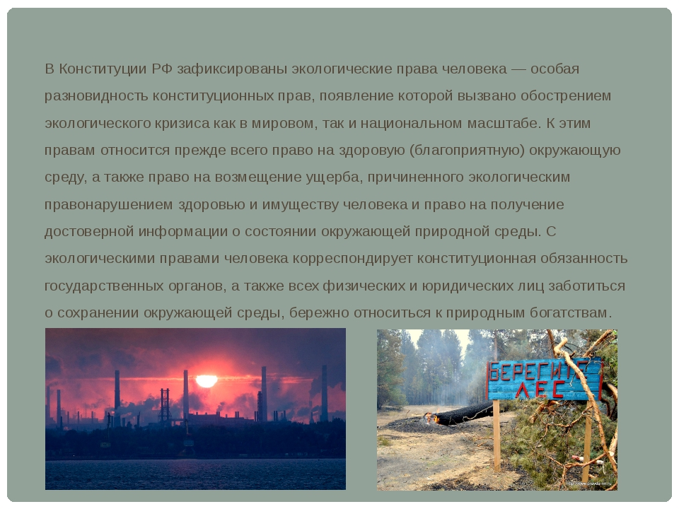 В Конституции РФ зафиксированы экологические права человека — особая разновид...
