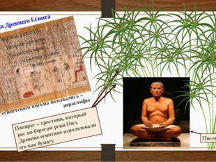 Папирус – тростник, который рос по берегам реки Нил. Древние египтяне использ