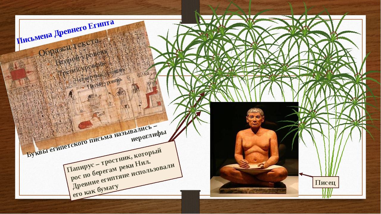 Папирус – тростник, который рос по берегам реки Нил. Древние египтяне использ...