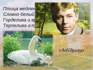 Птица медленно плывёт, Словно белыйтеплоход. Горделива и красива, Терпелива
