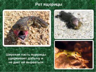 Широкая пасть ящерицы удерживает добычу и не дает ей вырваться Рот ящерицы