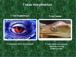 Глаза чешуйчатых У змеи веки сросшиеся, поэтому взгляд немигающий Глаз змеи Г