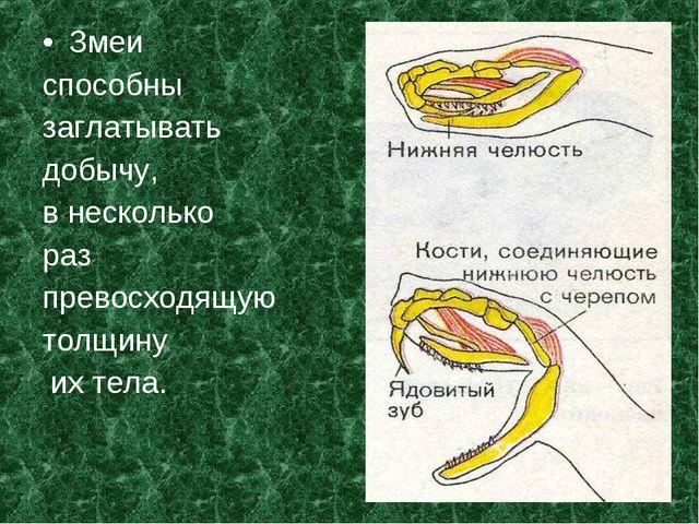 Змеи способны заглатывать добычу, в несколько раз превосходящую толщину их те...