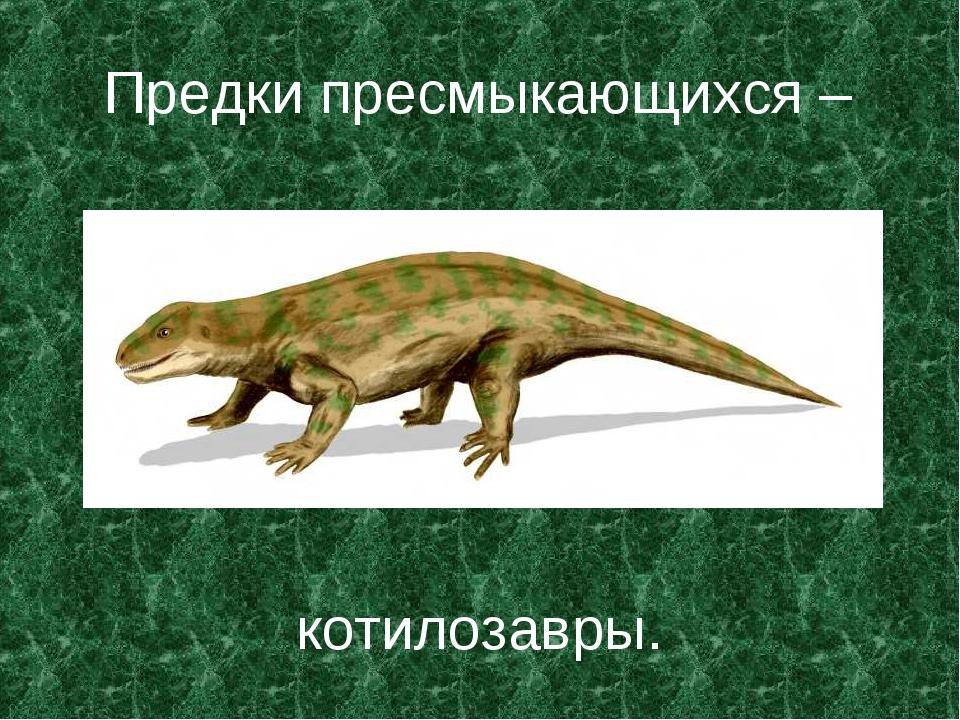 Предки пресмыкающихся – котилозавры.