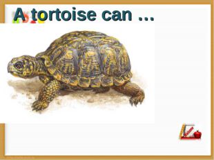 A tortoise can …