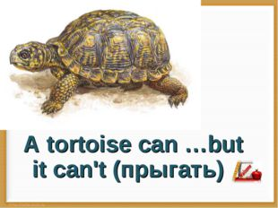 A tortoise can …but it can't (прыгать)