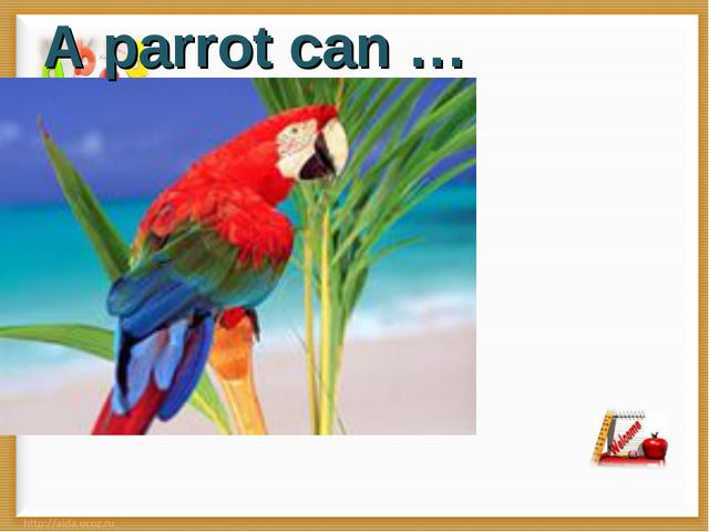 A parrot can …