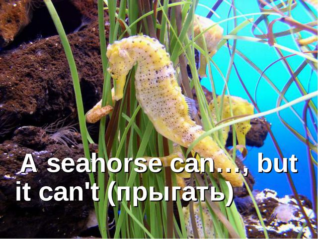 A seahorse can…, but it can't (прыгать)