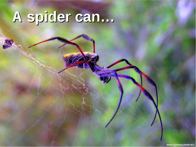A spider can…