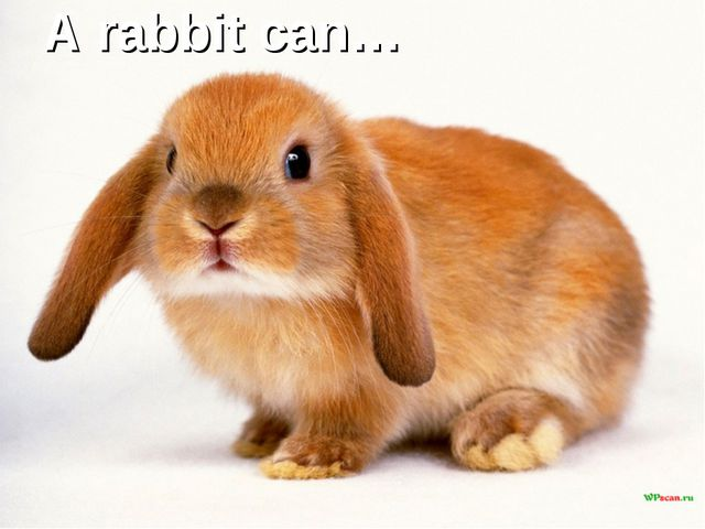 A rabbit can…