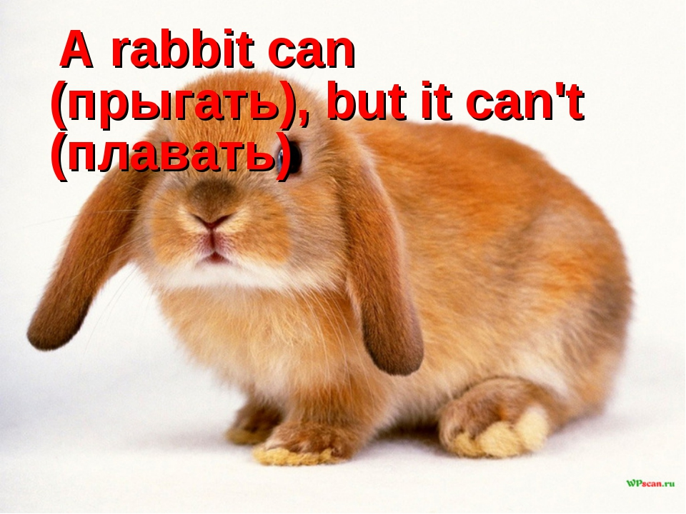 A rabbit can (прыгать), but it can't (плавать)