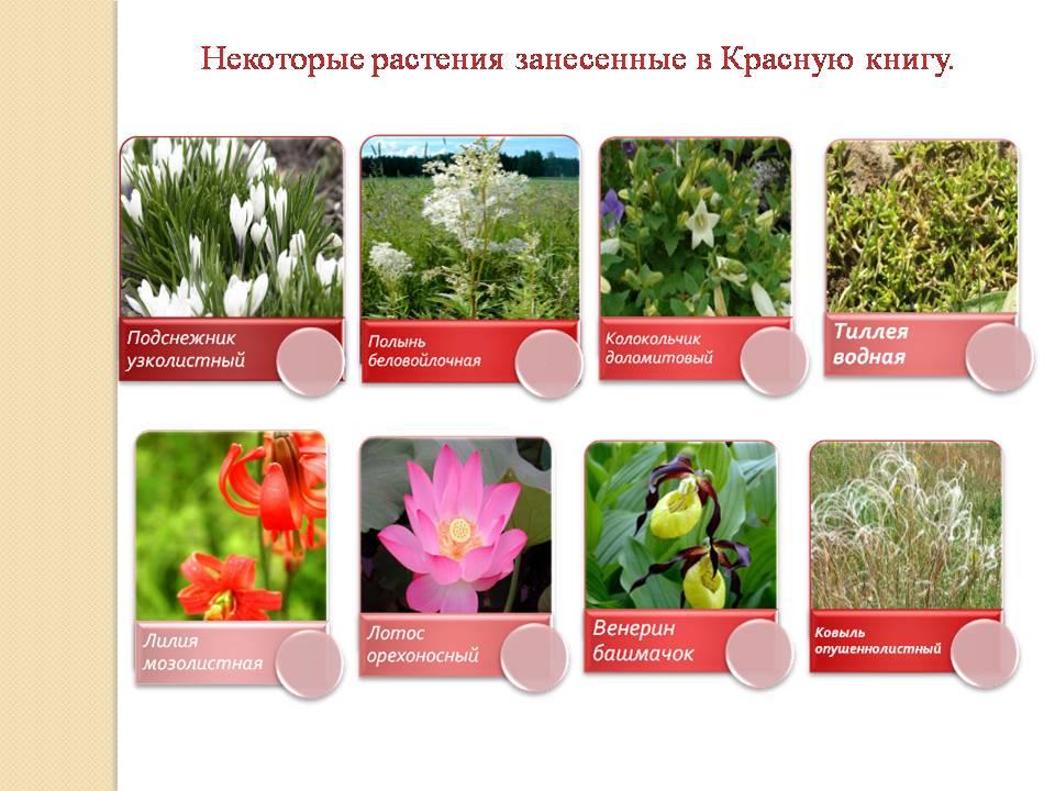 http://pwpt.ru/uploads/presentation_screenshots/392ed470b18023518098803cfa4cd267.JPG