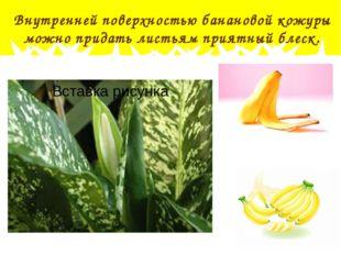 Внутренней поверхностью банановой кожуры можно придать листьям приятный блеск.