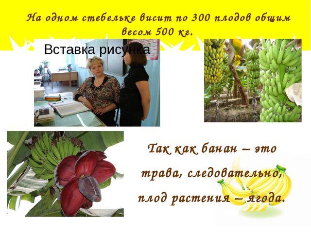 Так как банан – это трава, следовательно, плод растения – ягода. На одном ст...