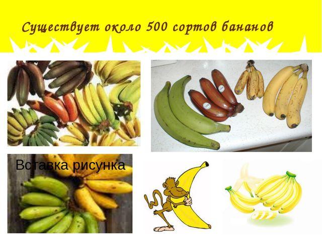 Существует около 500 сортов бананов
