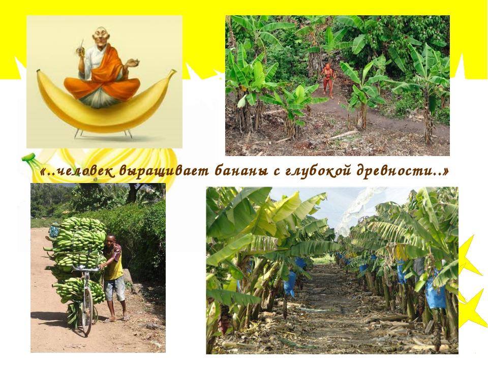 «..человек выращивает бананы с глубокой древности..»