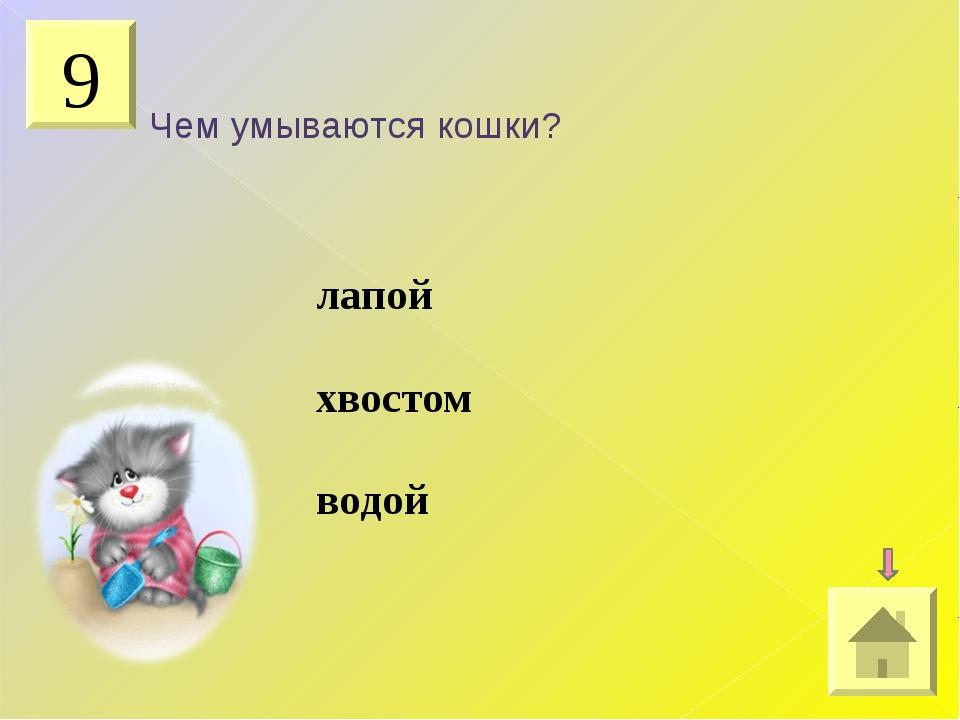 9 Чем умываются кошки? лапой хвостом водой