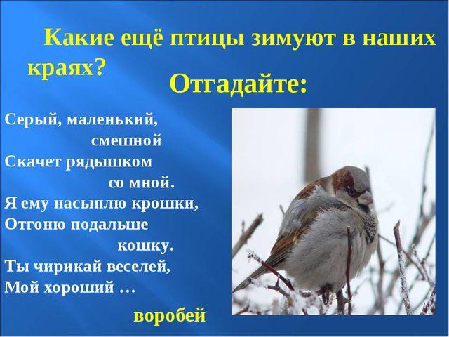 Отгадайте: Какие ещё птицы зимуют в наших краях? Серый, маленький, смешной Ск...