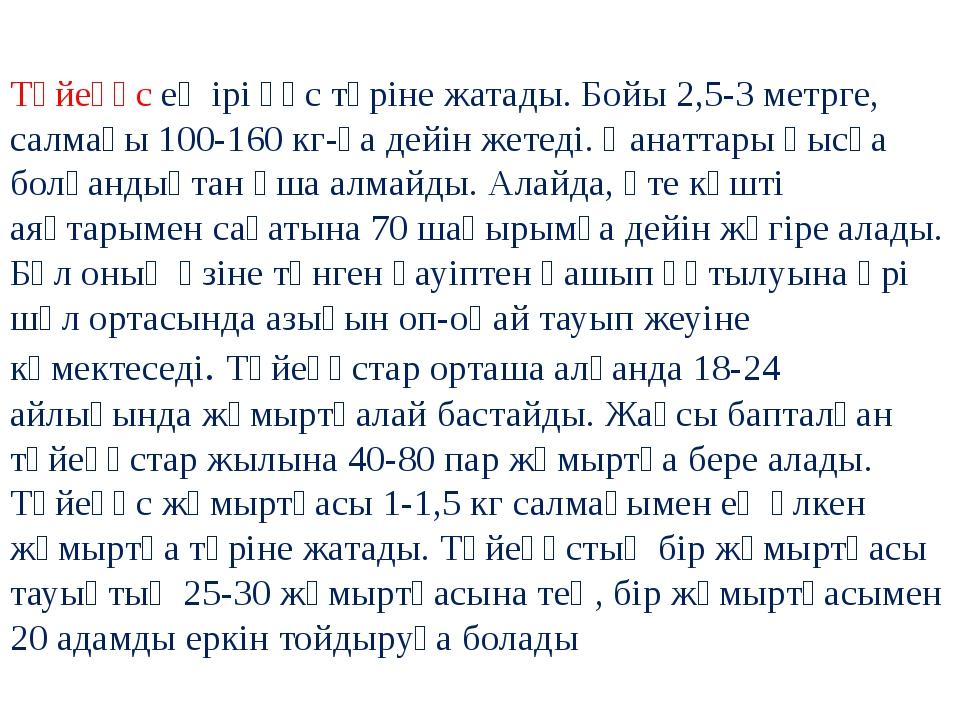Түйеқұс ең ірі құс түріне жатады. Бойы 2,5-3 метрге, салмағы 100-160 кг-ға д...