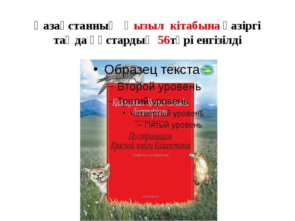 Қазақстанның Қызыл кітабына қазіргі таңда құстардың 56түрі енгізілді