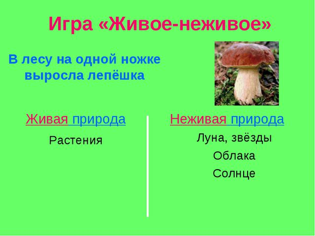 Игра «Живое-неживое» В лесу на одной ножке выросла лепёшка Живая природа Нежи...